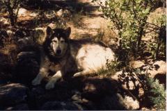15_1987